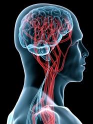 human-brain.jpg